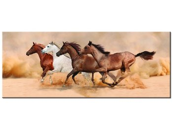 Obraz, Konie w galopie, 100x40 cm-Oobrazy