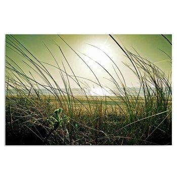 Obraz na płótnie, Nadmorskie trawy, 40x30 cm-Caro