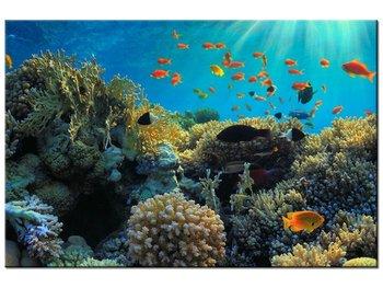 Obraz Rafa koralowa, 30x20 cm-Oobrazy