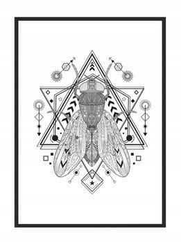 Obraz w ramie czarnej E-DRUK, Mucha, 33x43 cm, P1613-e-druk