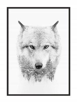 Obraz w ramie czarnej E-DRUK, Wilk, 33x43 cm, P1461-e-druk
