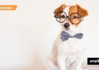 Pies i kot u psychologa – kiedy i jak pomoże behawiorysta?