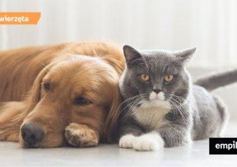 Pies z kotem w jednym domu. Fakty i mity o wspólnym życiu