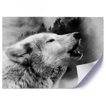 Plakat FEEBY Wilk we mgle, 100x70 cm-Feeby