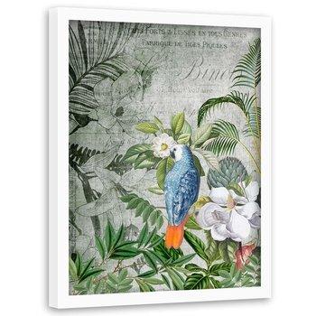 Plakat w ramie białej FEEBY Niebieska papuga, 50x70 cm-Feeby