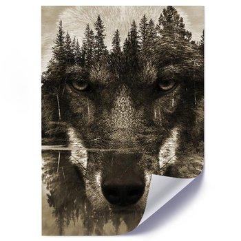 Plakat, Wilk podwójna ekspozycja - Plakat - 40x50-Feeby