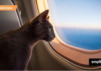 Podróż z kotem – jak temu sprostać?