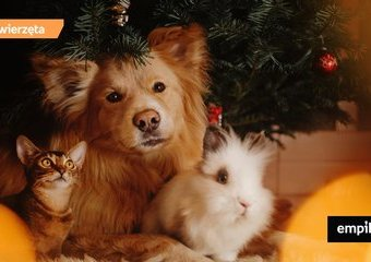 Prezent dla psa i kota na święta? Obdaruj swojego pupila