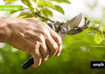 Przycinanie drzew owocowych: jak i kiedy ciąć drzewa i krzewy owocowe?