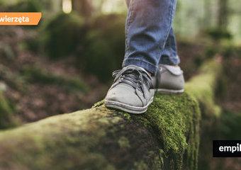 Spacery po lesie – o czym musisz pamiętać, wchodząc do lasu?