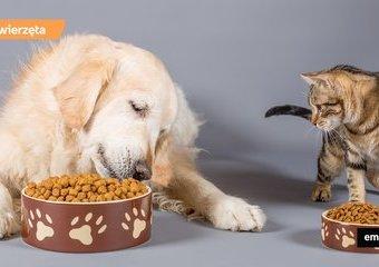 Sucha karma dla psa i kota. Jak ją dobrze przechowywać?