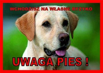 Tabliczka UWAGA PIES! Laminowana Labrador-Chico