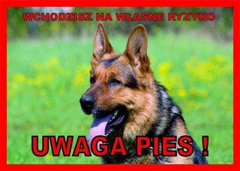 Tabliczka UWAGA PIES! Laminowana Owczarek niemiecki-Chico