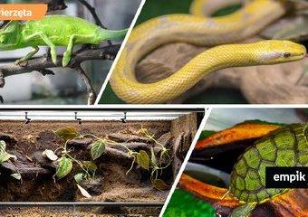 Terrarium dla żółwia, węża czy jaszczurki