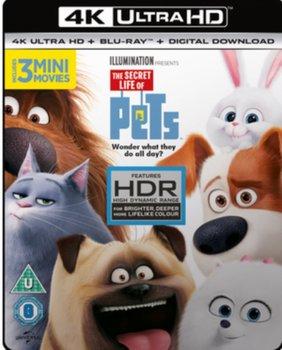 The Secret Life of Pets (brak polskiej wersji językowej)-Cheney Yarrow, Renaud Chris