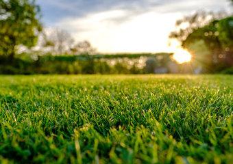 Trawnik na wiosnę: jak o niego zadbać? Co będzie potrzebne i kiedy zacząć?