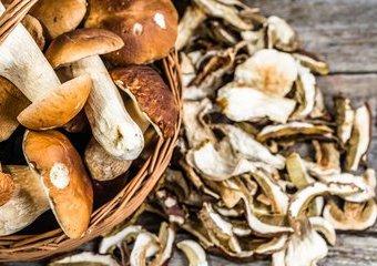 Suszarki do grzybów - jaką wybrać?