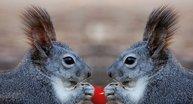 Co czuje natura...? Poznajcie sekretne życie zwierząt i roślin!
