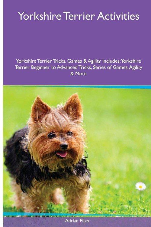 Yorkshire Terrier Activities Yorkshire Terrier Tricks ...