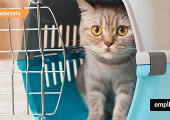 Zwierzak w podróży - jak transportować kota?