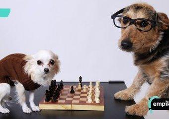 Zwierzaki na planszy, czyli gry planszowe o zwierzętach!