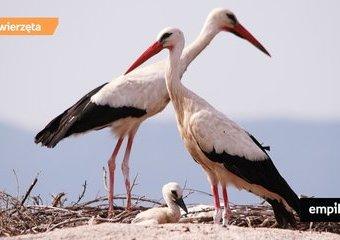 Zwyczaje godowe ptaków. Jak ptasi świat zwiastuje wiosnę?