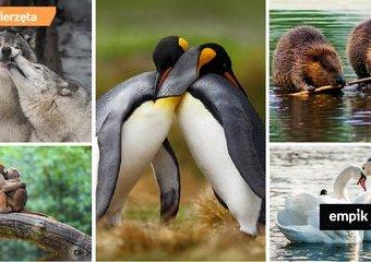 Życie miłosne zwierząt